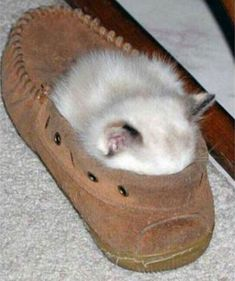 Slipper Warmer                                           Sleeping Kitten :)