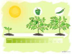 Grow Peppers Step 5.jpg