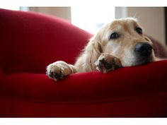 Early treatment of cognitive dysfunction may improve a dog or cat's quality of life.