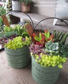 Buckets of Succulents. http://ideastand.com/succulent-garden-ideas/
