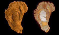 Jusqu'à récemment nous croyions que les origines de la vie remontaient à 670 millions d'années. La d...