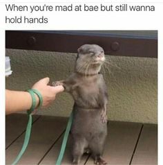 """I strongly relate to this otter, it's like """"I hate you right now, but I don't want to be lonely, please stay!"""""""
