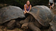 Giant turtles on Galápagos - Seeing them is utterly unreal! Turtles, South America, Backpacking, Travel Inspiration, Wildlife, Explore, Pictures, Animals, Voyage