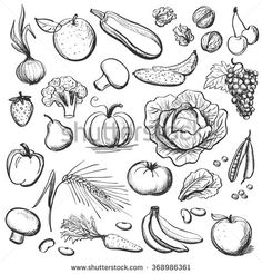 Find Hand Drawn Healthy Eating stock images in HD and millions of other royalty-free stock photos, illustrations and vectors in the Shutterstock collection. Realistic Drawings, Easy Drawings, Recipe Drawing, Food Doodles, Bullet Art, Food Sketch, Still Life Drawing, Garden Drawing, Simple Illustration
