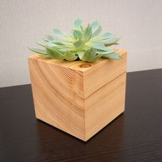 Modern Cactus Planter http://www.etsy.com/listing/113049000/three-succulent-garden-planters-in