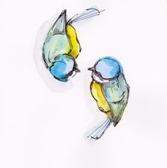 """artfinder: """" Two blue tits by Becca Alaway Watercolour painting """" A collection of bird paintings using a loose ink and watercolour wash…"""