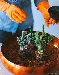 To Plant Succulents With Pictures Succulents Network Cactus Life wedding Terrarium succulentes Succulent Bouquet, Succulent Care, Succulent Terrarium, Cacti And Succulents, Planting Succulents, Cactus Plants, Planting Flowers, Cactus Decor, Terrarium Wedding