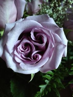 ⭐A lavender rose with three spirals⭐