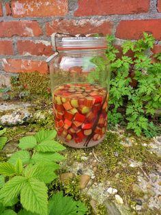 De rabarberplant staat al heel lang (meer dan 5000 jaar!) bij de mens in de belangstelling als geneeskruid (vrnl. de wortel van de Russi...