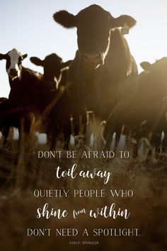 Shine from Within - Cattle