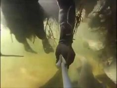Подводная съемка сомов