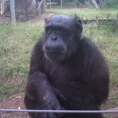 chimp eden Jao