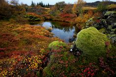 https://flic.kr/p/giz6yR | Autumn colours at National Park Thingvellir, Iceland | Haust á Þingvöllum
