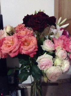 Rose di Elvio