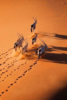Namib desert by Martin Harvey