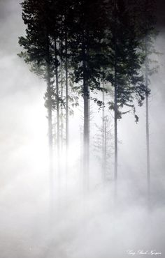 ♂ Amazing nature misty trees silence nature by Long Bach Nguyen
