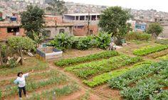 A favela de SP que tem horta comunitária mantida pelos próprios moradores