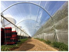 SWD insect netting covering the polytunnel over the end alley way in order to protect the blackberry plantations against the fruit fly Spotted wing drosophila. Bird Netting, Fruit Flies, Blackberries, Insects, Spanish, Mesh, Accessories, Greenhouse Plans