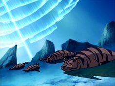Tigre foca   Avatar Wiki   Fandom powered by Wikia
