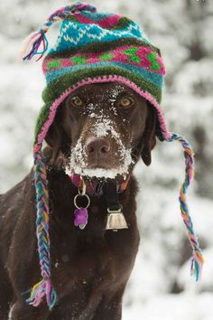 fashionablyaspen:  pawsforpets: Aspen chic at Wagner Park