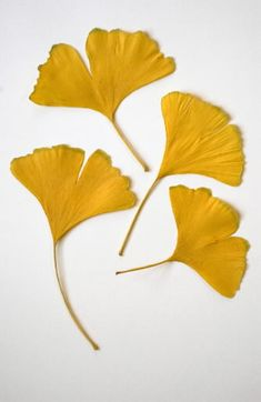 Gingko leaves - yellow Love these Linolium, Bijoux Art Nouveau, Motif Vintage, Thanksgiving Table Settings, Foliage Plants, Leaf Art, Autumn Leaves, Images, Illustrations