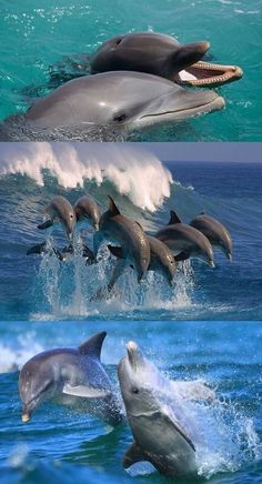 dolphin photography Baby Animals is part of Baby Dolphin Pictures Photos Of Cute Baby Young Sea Mammals - Do Dolphins Carry On Conversations dolphins conversations sea world Dolphin Images, Dolphin Photos, The Ocean, Rare Animals, Funny Animals, Strange Animals, Orcas, Bottlenose Dolphin, Humpback Whale