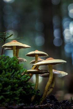 [Image] | 20+ Mushroom Photographs That Capture The Life Of Fungi In... - TIMEWHEEL