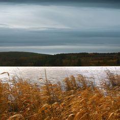 Reeds... by Jem Salmon, via Flickr