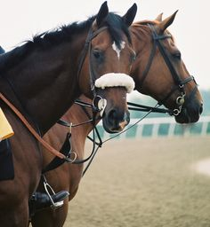 """startinggate: """" Today is the fifth anniversary of Barbaro's death. Remember him for his courage and his brilliance, not his untimely tragedy. """""""
