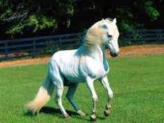 horses | Horse Wallpapers|HD Horses Wallpapers