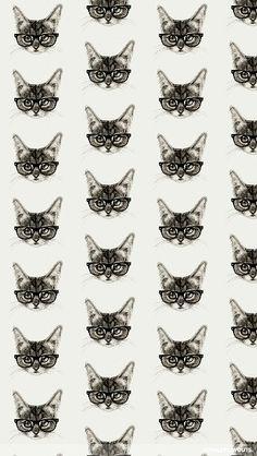 Gatinhos com óculos
