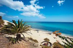 Bitte nicht erschrecken, wenn Sie zum ersten Mal nach Fuerteventura kommen! Auf der Fahrt vom Flughafen zur gebuchten Hotelanlage wird es Ihnen sicher ins Auge fallen: Die Insel ist ja grau und spröde wie eine unrasierte Altmännerwange! Fast schon verzweifelt sucht man zwischen Steinen und Geröllhalden nach grüner Idylle. Doch keine Panik: Ein Blick auf das türkisblaue Meer vor Fuerteventura wird Sie mehr als entschädigen.