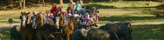 Lazy 5 Ranch - wagon ride (about 40 min) to see animals and feed animals from wagon