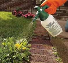 How to get rid of weeds in lawn - 6 how-to strategies from the pros, plus the best weed killer for lawns and other pro tips for fool-proof lawn weed control! Killing Weeds, Weed Types, Weeds In Lawn, Kill Weeds Not Grass, Grass Weeds, Weed Control, Lawn Care, Outdoor Projects, Diy Projects
