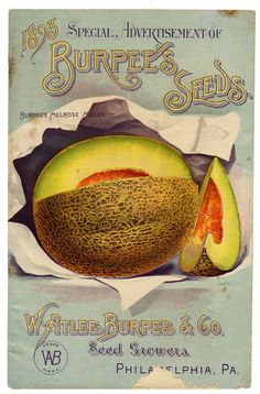 Sisters Warehouse: Vintage card seeds... seeds packs