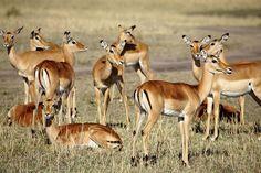 Tourist Information, Safari, National Parks, Wildlife, Game, Amazing, Gaming, Toy, Games