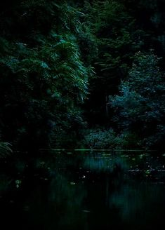 Dark forest green Dark Green Aesthetic, Nature Aesthetic, Deep Forest, Magical Forest, Def Not, Slytherin Aesthetic, Dark Photography, Wedding Photography, Jungles