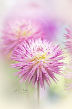 Pastels by Jacky Parker on 500px