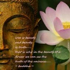 in the beauty of a flower we can see the truth of the universe- buddha Buddha Wisdom, Buddha Zen, Buddha Buddhism, Buddha Quote, Lotus Flower Quote, Flower Quotes, Buddhist Philosophy, Overcome The World, Love Truths