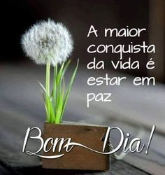 Bom Dia - Mensagens para Facebook Peace Love And Understanding, Morning Inspiration, Night Quotes, Day For Night, Kids And Parenting, Peace And Love, I Card, Good Morning, Quotations