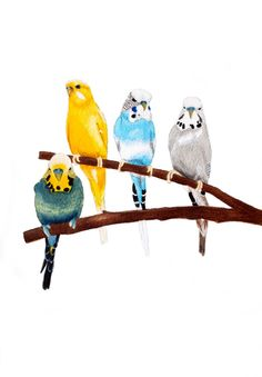 Four Budgies Print by ByKellyAttenborough on Etsy