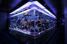 1300G Reef Aquarium Led Lighting Orphek