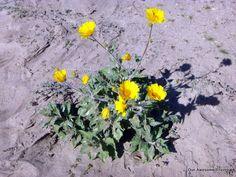 our first desert flower