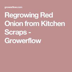 Regrowing Red Onion from Kitchen Scraps - Growerflow