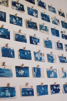 Great way to display art without the cost of framing.Cyanotypes of weeds on old postcards Sun Prints, Nature Prints, Exhibition Display, Exhibition Ideas, Cyanotype, Old Postcards, Art Plastique, Art Lessons, Printmaking