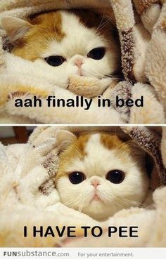 Cool pictures about 15 Funny Animal Memes for Your Thursday. Oh, and funny pics about 15 Funny Animal Memes for Your Thursday. Also, 15 Funny Animal Memes for Your Thursday photos. Cute Animal Memes, Funny Animal Quotes, Animal Jokes, Funny Animal Pictures, Cute Funny Animals, Cute Baby Animals, Funny Cute, Cute Cats, Animal Pics