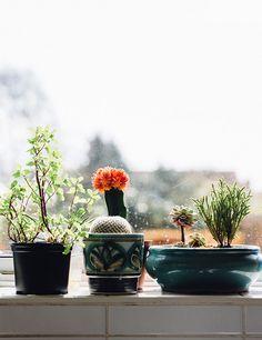 potted plants in a window. / sfgirlbybay