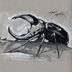 Specializing in Art and Visual Technology Mind Map Art, Beetle Drawing, Rhino Beetle, Bug Art, Anime Tattoos, Drawing Base, Cool Art Drawings, Art Sketchbook, Art Reference