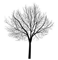tubes arbres arbustes feuillages - Arbre Sans Feuille