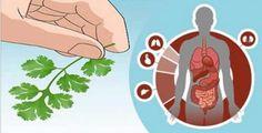 Esta receita, com apenas dois ingredientes, é maravilhosa para a saúde como um todo.Mas os seu principais efeitos são o emagrecimento, eliminação do inchaço e a limpeza do fígado e rins em poucos dias.